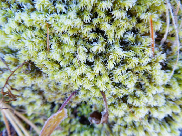 Moss Lichen Alpenflora Macro Macro_collection Macro Photography Nature_collection