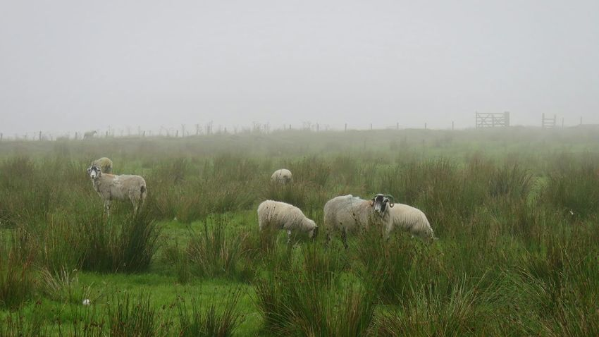 Fog Animals In The Wild Nature Grass Animal Wildlife No People Outdoors Mammal Animal Themes Beauty In Nature Day Rural Scene Scenics Water Sky Tree Foggy Morning