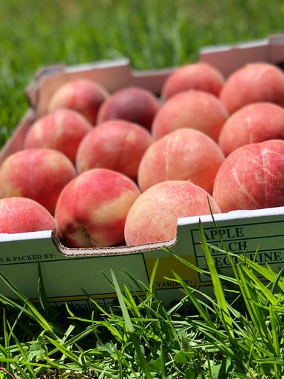 Peaches @ Raeburn Orchards Orchard Packed Fruit Tray Of Fruit Peaches Peach Food Food And Drink Freshness Healthy Eating Wellbeing Plant Grass Outdoors Agriculture Organic Close-up Fruit