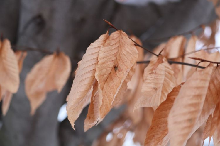 Leaf Autumn Change Day Close-up No People EyeEmNewHere Maple Fragility Nature Outdoors Focus On Foreground