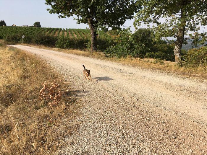 Dog Italy Running Dog Tuscany Vacations Landscape Landscape_Collection Landscape_photography