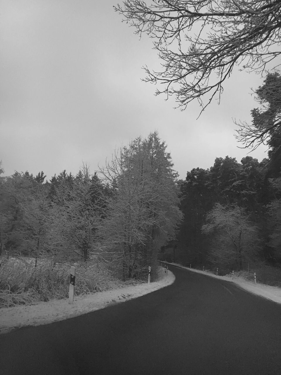 tree, plant, road, sky, transportation, the way forward, direction, nature, tranquility, no people, beauty in nature, growth, tranquil scene, day, land, scenics - nature, outdoors, non-urban scene, landscape