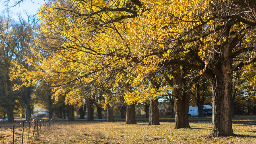 Tree Autumn Plant Change Park Yellow Beauty In Nature Tree Trunk Trunk Nature Park - Man Made Space Growth Plant Part Leaf No People Tranquility Day Branch Outdoors Tranquil Scene Park Bench Autumn Collection Fall