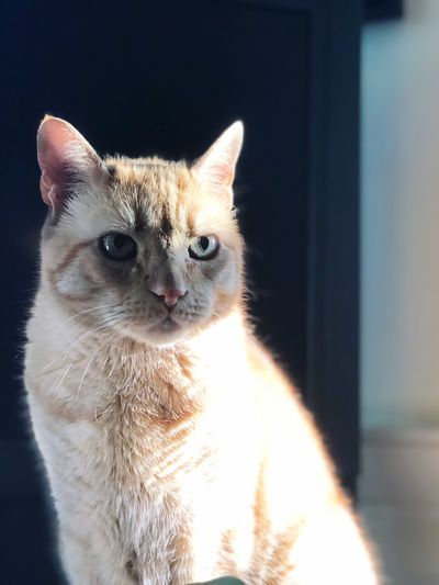 Domestic Domestic Animals One Animal Animal Themes Mammal Animal Domestic Cat Feline Cat Focus On Foreground No People Close-up Portrait Looking Away Whisker Indoors  Sunlight Looking