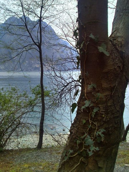 Lake Of Iseo Lago Di Iseo Trees Lake The Places I've Been Today Looking For Freedom Time To Reflect Italy Searching Inspiration Lovere