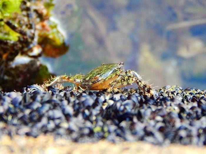 Vai vari ieraudzīt krabi? 😊 Can you see the crab? 😊😊😊 Better Look Twice Krabis Crab Italija Italy Jura Sea Paslepes Hide Fotofanatics_nature_ Daba Nature Naturephotography Ig_myshot Showcase: January