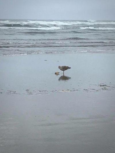 Birds on sea against sky