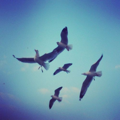 Fighting bird Birds Sea Mumbai Elphantocaves