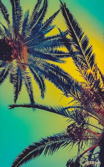 43 Golden Moments Palm Trees Sky Sunshine Sun Beauty In Nature Day Green Leafs Close-up Tranquil Scene Idir Reggai
