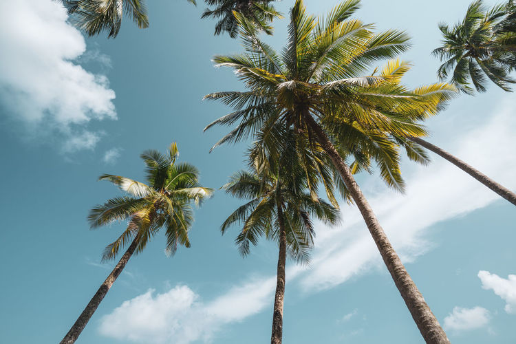Sky Palm Tree Low Angle View Tree Tropical Climate Cloud - Sky Plant Growth Beauty In Nature Nature No People Tranquility Tree Trunk Trunk Day Coconut Palm Tree Tall - High Scenics - Nature Outdoors Tropical Tree Palm Leaf