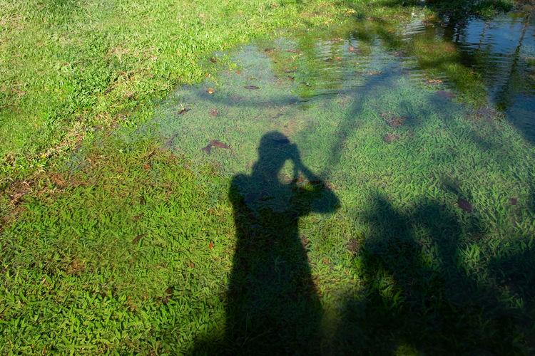 Grass Shadow