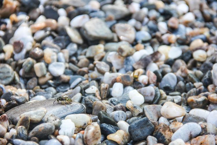 Close-up of multi colored stones