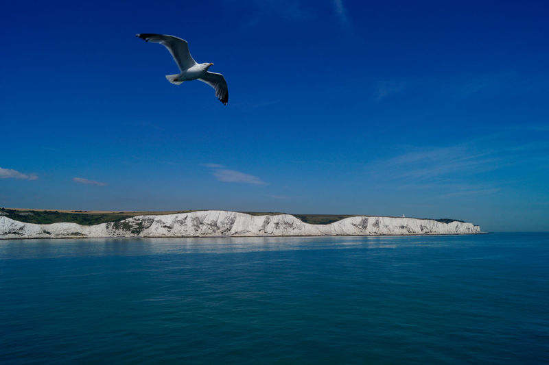 Blue Flying Mountain Sea Sea And Sky Seagull SEAGULL IN FLIGHT Seagulls And Sea Sky Sky And Clouds Spread Wings Water White White Cliffs  White Cliffs Of Dover The Great Outdoors - 2016 EyeEm Awards