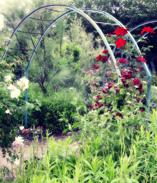 Natures Medicine Walkn Through The Garden Flowers,Plants & Garden