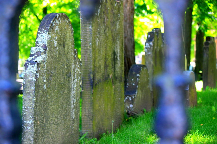 Cemetery Casual Clothing Cemetery Close-up Day Focus On Foreground Grass Green Green Color Growth Headstones Headstones In A Row Leisure Activity Nature Outdoors Selective Focus Tranquility Tree