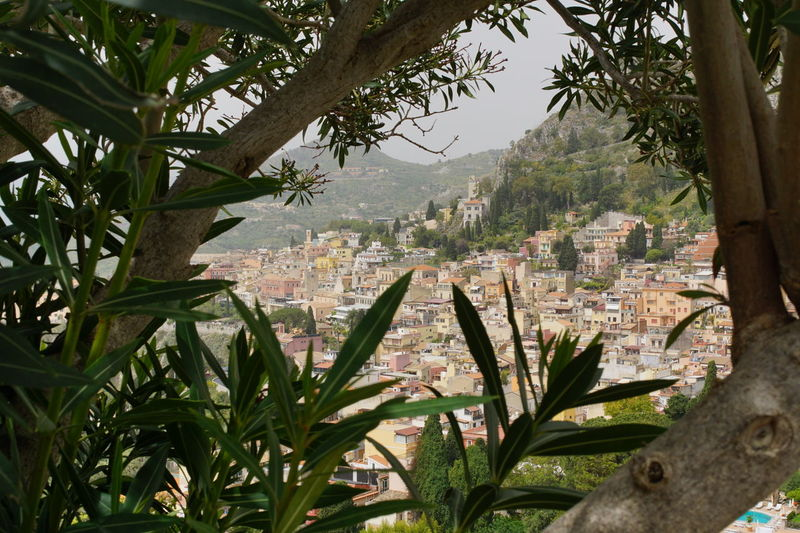 Tree Nature Day Outdoors Sicily ❤️❤️❤️ Sicily, Italy Tourism Destination Tourism Travel Destinations Taormina, Sicily 🇮🇹 Taormina City View From The Top Viewpoints