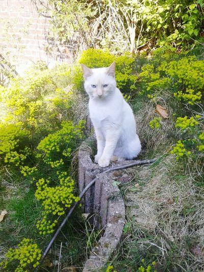 C 'est mon chat Loulou