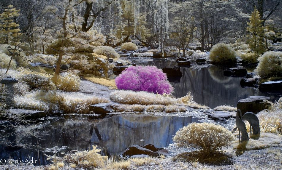 Color Infrared . Gibbs Gardens Life Pixel Infrared Life Pixel Olympus Infrared Olympus Pen Olympus Color Infrared Infrared Water Nature Outdoors Beauty In Nature Day No People Snow Tree Lake