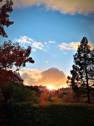 """Sunset On The Ridge"" From colorful Autumn trees in a local neighborhood yard to the ridges high above as the sun sets, Northern California rivals any location on earth for diversity in nature. Suburban Exploration Autumn Autumn colors Fall Fall Colors Dusk Sundown Sunsets Sky Beauty In Nature Sunlight Cloud - Sky Tree Sun Sunbeam Nature Sunset Lens Flare Scenics - Nature Landscape"