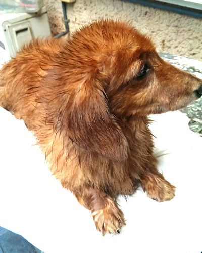 Shower timeMydog Dog After Shower Shower FUNNY ANIMALS Animal