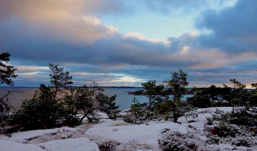 Christmas Morning Landscape Winter