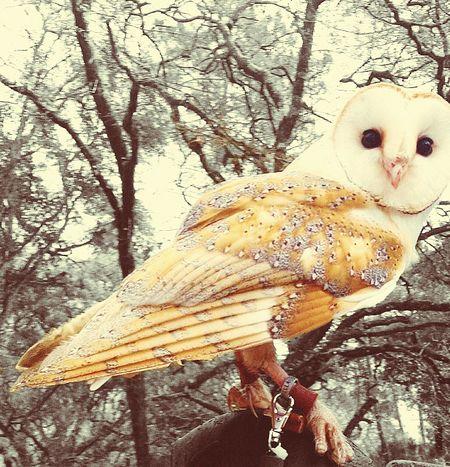Owl White EyeEm Nature Lover Beautiful Animals  Relaxing Taking Photos Hello World Enjoying LifeCute♡ Hi!