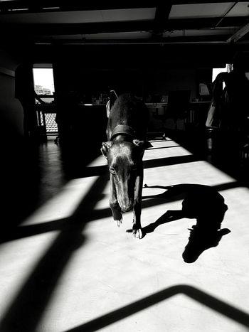 Pavio! Blackandwhite Streetphotography Monochrome Monoart Streetphoto_bw Mobliephotography
