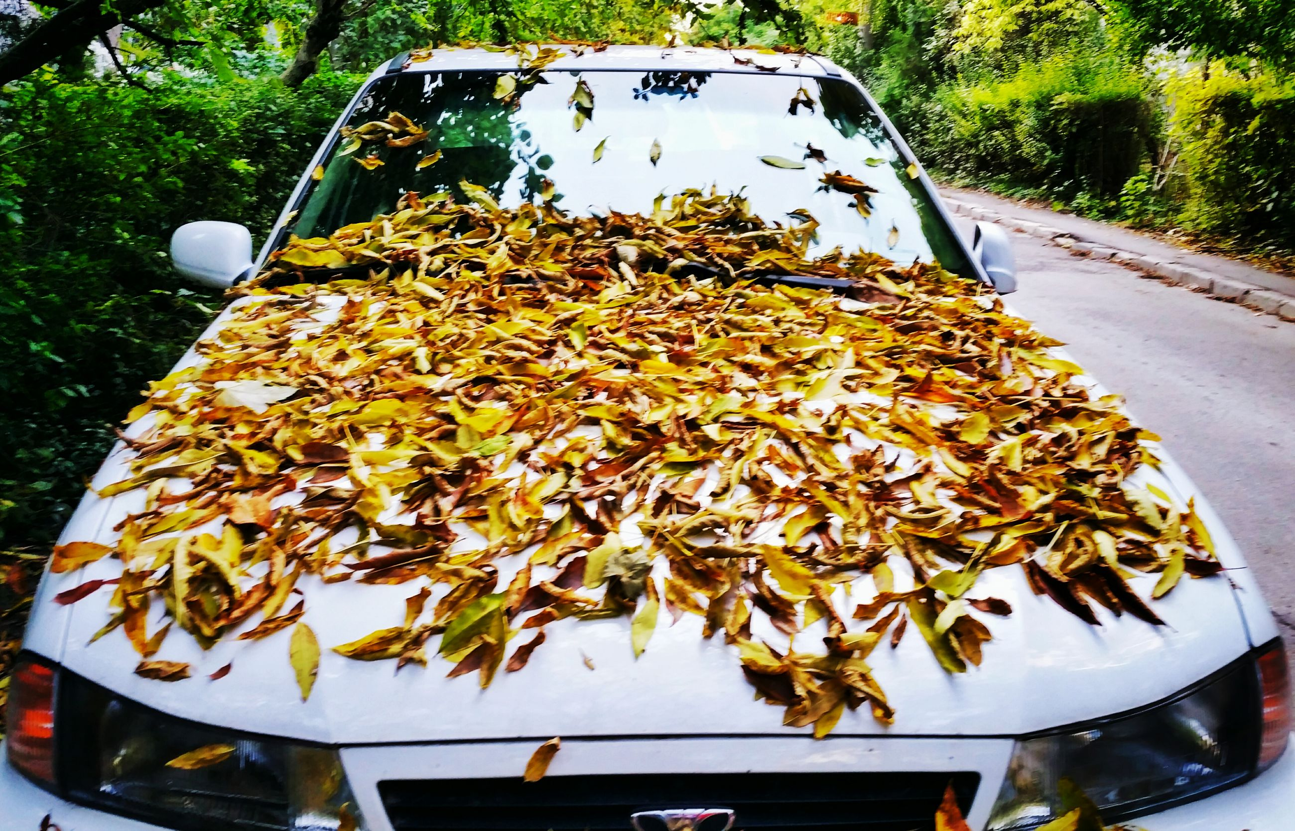 autumn, close-up, freshness, day, leaves, collection, surface level, no people, the way forward, beauty in nature