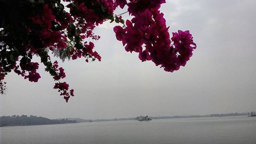 The coolest thing I know till now is , m going to take Photography as a CAREER !! Foggy FoggyMrngs UdaipurMorningsPicNumber27 UdaipurMrngs MistyMrngs Udaipurities Flower Shades Fog Mobilephotography FavouriteTimes Udaipurities Sweetudaipur Unseenudaipur UdaipurBlogs Instaudaipur MyUdaipur Mysnap