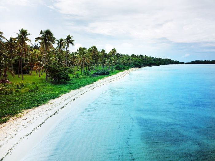 An aerial view of a tropical beach with tropical coconut palm trees, white sand and turquoise water Blue Lagoon Aerial Shot Drone Photography Dronephotography Aerial Photography Aerial View Beach Turquoise Water Coconut Palm Tree Tropical Tree Tropical Paradise Tropical Climate Plant Tree Sky Cloud - Sky Water Beauty In Nature Nature Tranquility Tranquil Scene Scenics - Nature Outdoors Palm Tree Sea