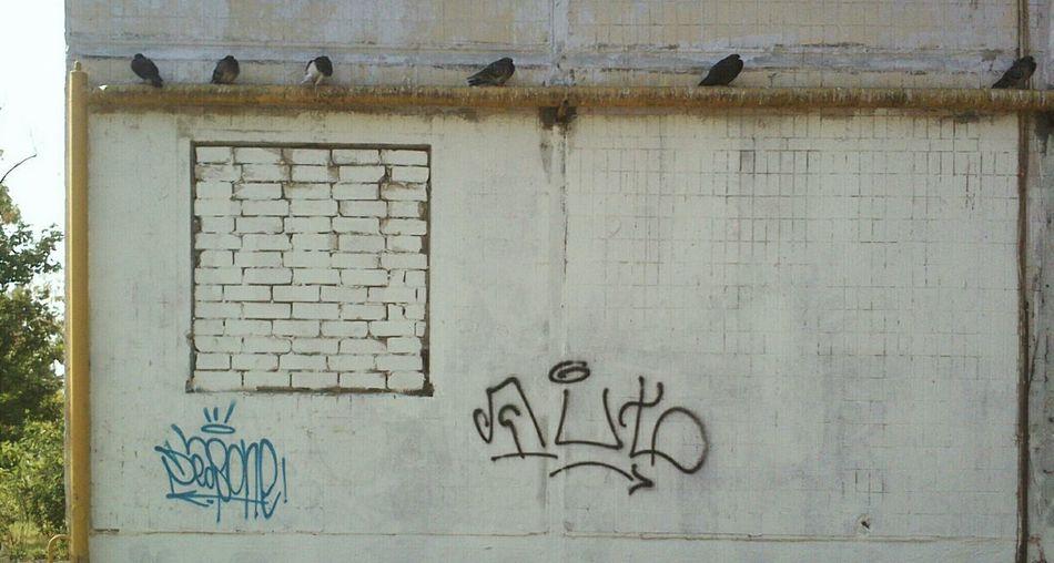 Decay VSCO СНГ Window