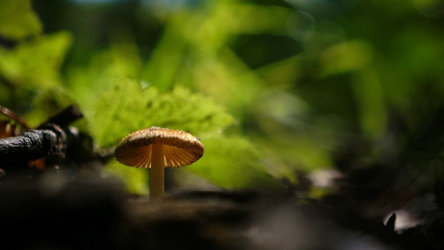 Beauty In Nature Botany Brown Cap Close-up Day Focus On Foreground Forest Forest Floor Fragility Fungus Green Color Ground Growing Growth Mushroom Mushroom Cap Natural Pattern Nature No People Outdoors Plant Selective Focus Toadstool Tranquility
