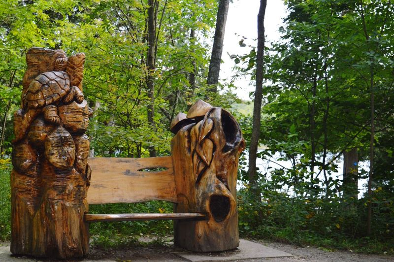 Crawford Lake. @Ceedeeznutz. I found a perfect bench for us. 😁 💜 💚 Tree Statue Sculpture Wood - Material Forest Green Color