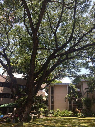 Visiting Hugging A Tree Taking Photos