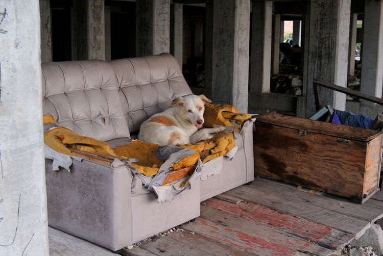Stray dog on damaged armchair Damage Dogs Of EyeEm Lay Down Under Abondoned Animal Animal Themes Armchair Comfort Comfortable Cute Day Dog Dogslife Domestic Domestic Animals Furniture Mammal No People One Animal Pets Relaxation Resting Sofa Structure