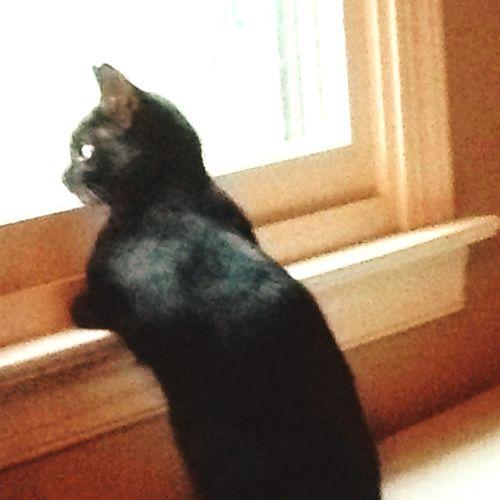 Pookie  Pets One Animal Window Indoors  Domestic Cat No People Feline