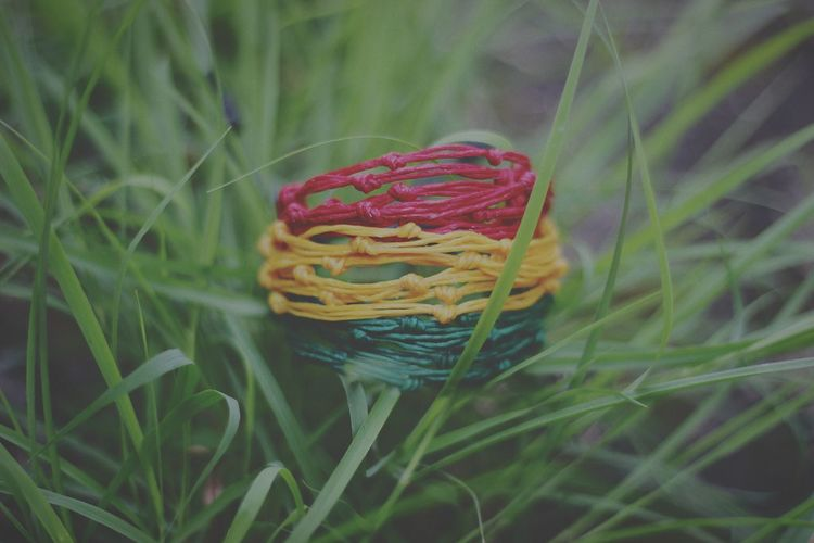 Multi Colored Basket Green Color Plant Nature Close-up Outdoors Grass No People Day Flower Beauty In Nature Knitting Needle Thailand🇹🇭 Reggae Music  Reggae Festival Reggae Human Body Part One Young Woman Only first eyeem photo Healthcare And Medicine Rose - Flower Arts Culture And Entertainment Reggae Music  Freshness