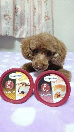 Haagen-Dazs 華もち きなこ黒みつ みたらし胡桃 三日遅れでGet? Haagendazs Haagen Dazs My Dog I Love My Dog Dog Love My Dogs Are Cooler Than Your Kids Dog Life Ice Cream Japanese Food Japan