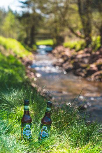 Tuborg by fishing in German mountains, in Schwarzwald Beer Exploring Fun Water Bottle Close-up Green Color Shining Tranquil Scene Tranquility Blooming Idyllic Countryside