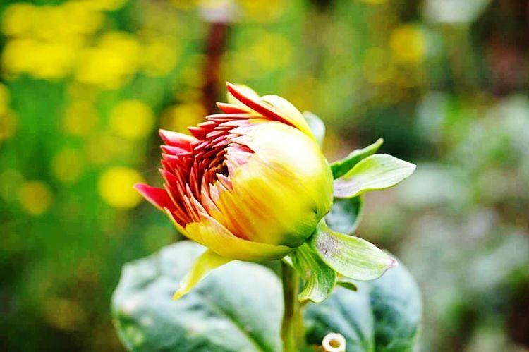 Flower Freshness
