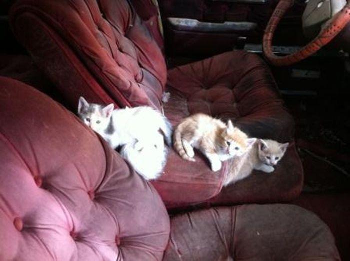 Stray cats on