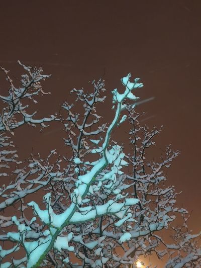 Low angle view of frozen bare tree during winter
