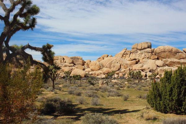 Amazing Arizona Beautiful Landscape California Desert EyeEm Nature Lover Holiday♡ Joshua Tree National Park Nature_collection Stones USA Yucca Yuccaplant