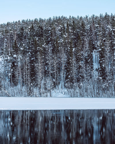 Panoramic shot of trees on lake against clear sky