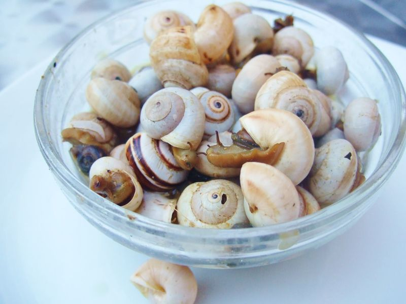 a bowl of small snails, Caracoles in Spain Caracoles  Food Food And Drink Organic Snack Snails Snails In Shells Still Life Small Snail Small Snails Snail Snack Cutesnail Bowl Of Snails Cooked Snails Snail Face Hay Caracoles Visual Feast Mix Yourself A Good Time Pet Portraits Food Stories
