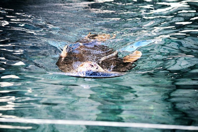 Water Day Outdoors Swimming Riddle Smyth EyeEm Selects EyeEmNewHere No People Animals Animal Photography Tiere Tierpark Wasser Seerobben