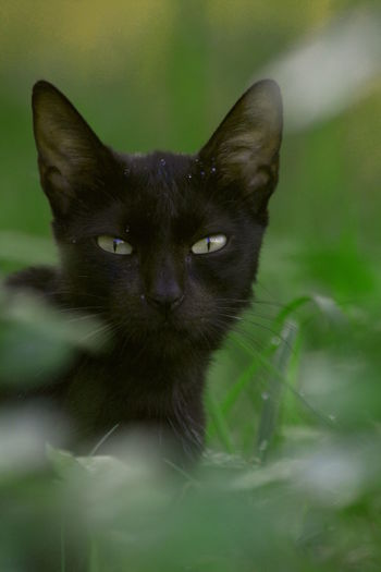 Black Cat Black Cats Are Beautiful Cats Of EyeEm Black Cat Photography Black Cats Cat Cats Catsofinstagram Close-up