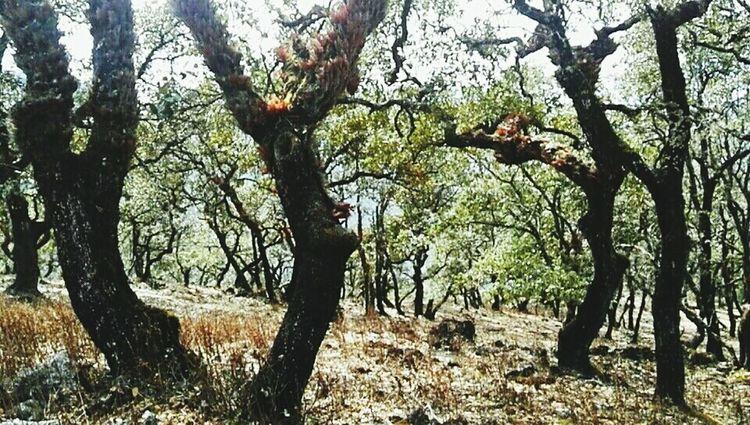山林 Tree Branch Tree Trunk Forest Sky