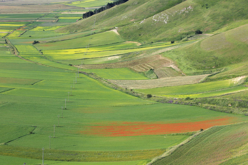 Agriculture Blooming Castelluccio Di Norcia Countryside Cultivated Land Fields Flowers Geometry Green Italy Landscape Norcia Outdoors Patchwork Fields Patchwork Landscape Red Rural Rural Scene Scenics Vibrant Colors Yellow