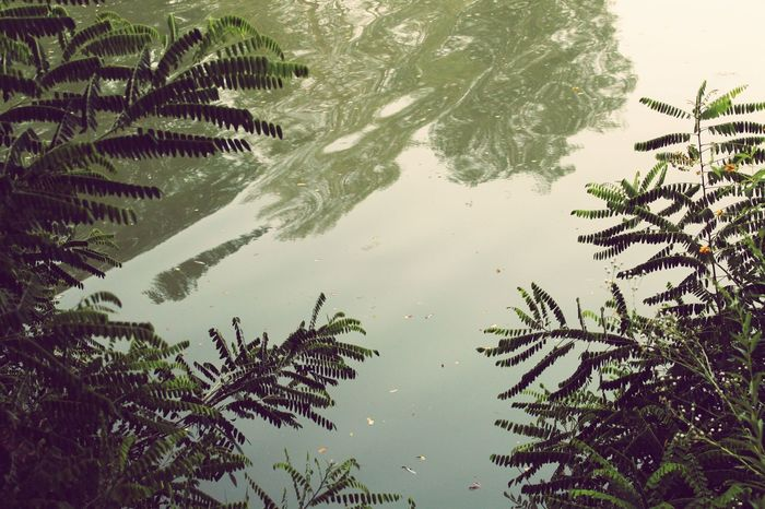 #photography #naturelove #effect #Filter  Nature_perfection Naturelovers Light Tree Water Lake Leaf Plant Part Flood Sky Plant Water Plant Algae Standing Water Uncultivated Calm Wildflower Countryside Lotus Water Lily Lush - Description Floating